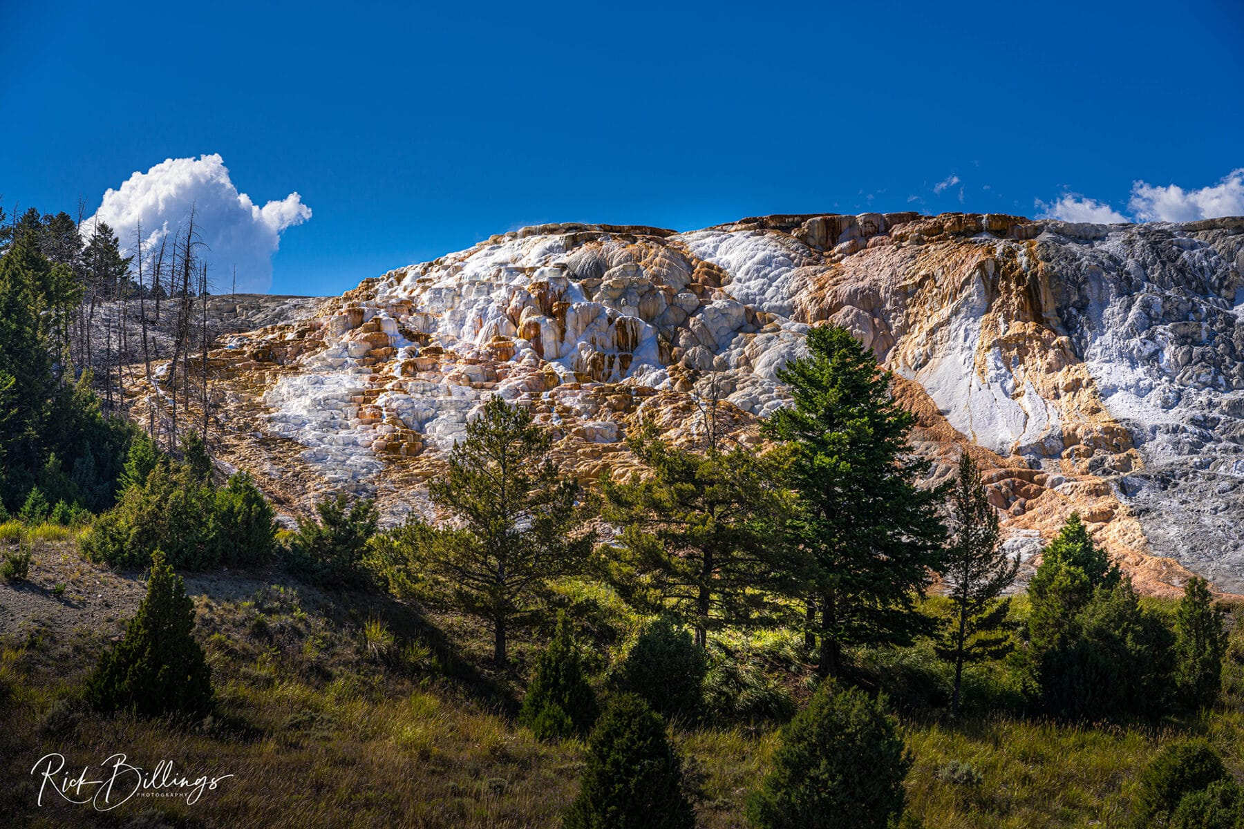 No 1028 20190819 Yellowstone Mammoth Hot Springs