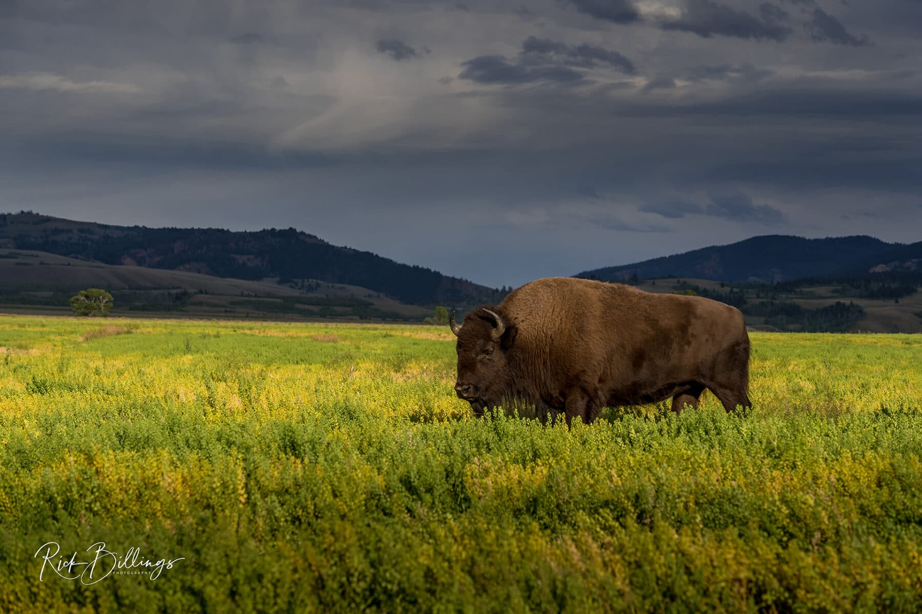 No 1063 20190822 Bison Range