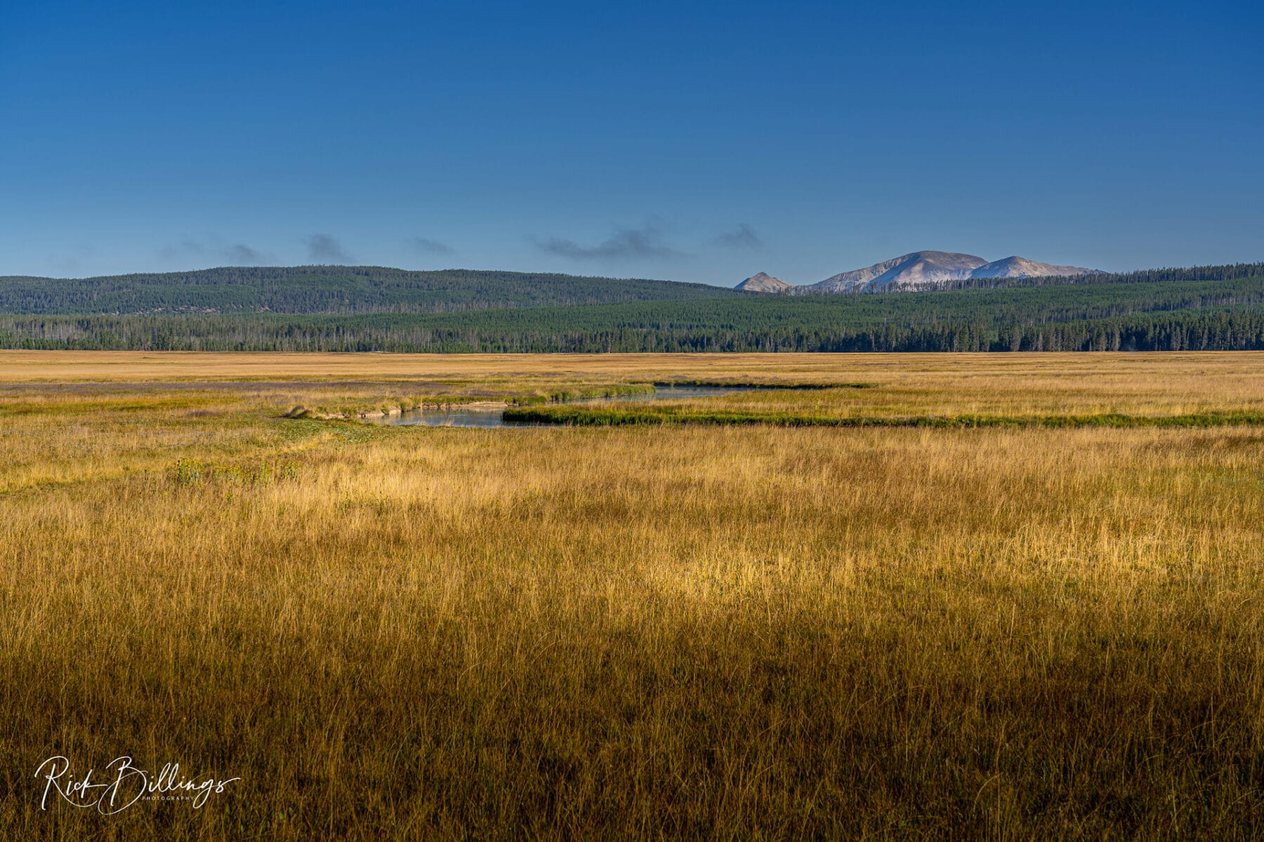 No 1079 20190821 Yellowstone Prairie